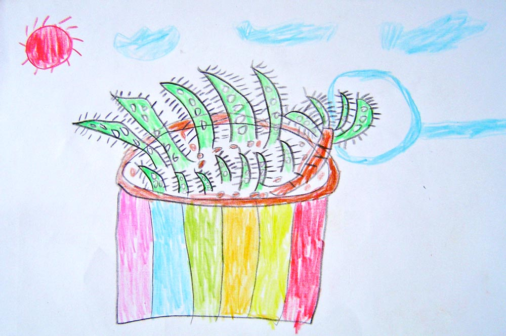 Figure 3. Aloe plant observation by TWIG Project participant age 10, Ruyang China.